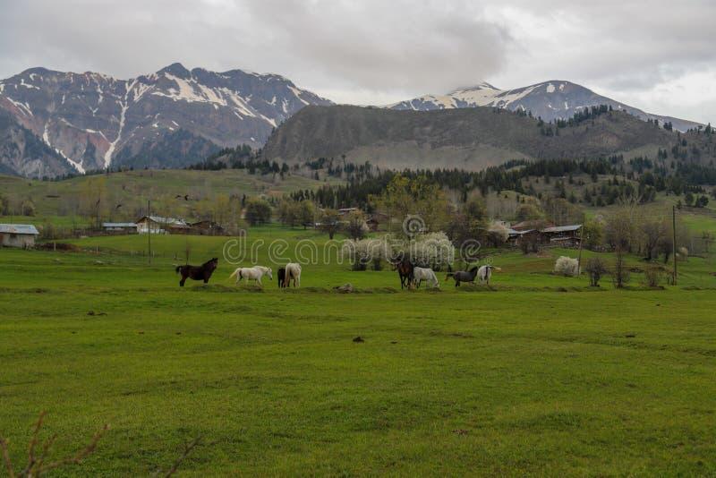 Prados verdes, caballos, vacas, ovejas imágenes de archivo libres de regalías