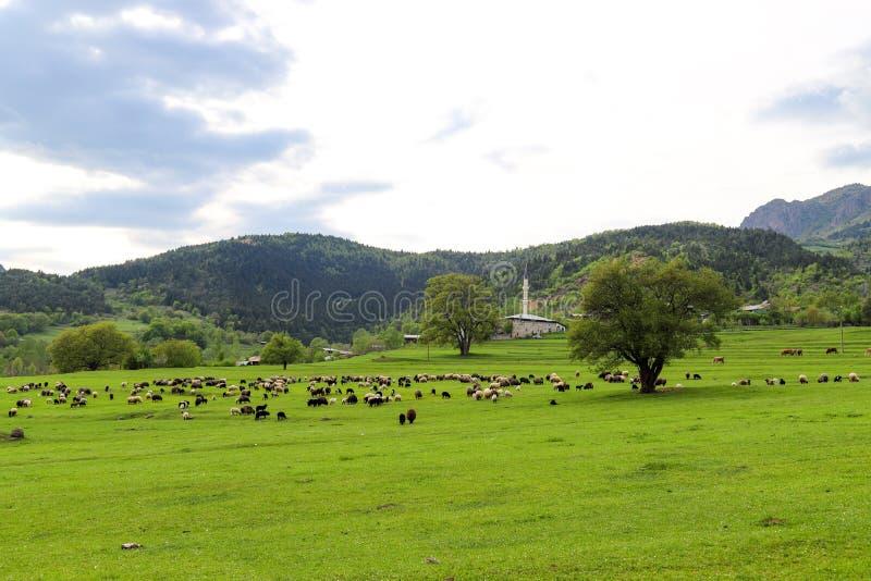Prados verdes, caballos, vacas, ovejas imagenes de archivo
