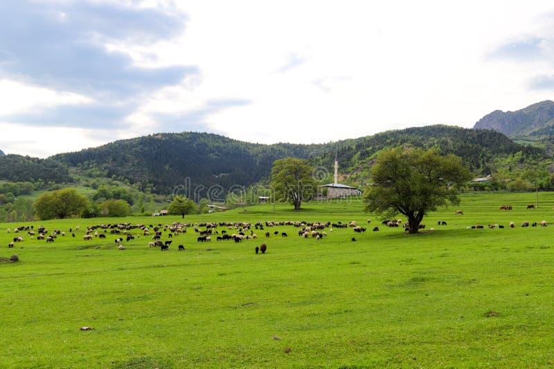 Prados verdes, caballos, vacas, ovejas foto de archivo