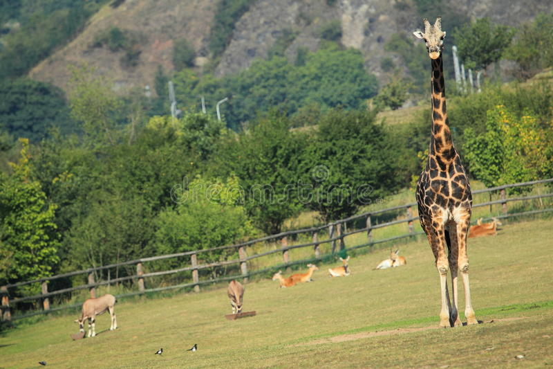 Prag-Zoo lizenzfreies stockbild