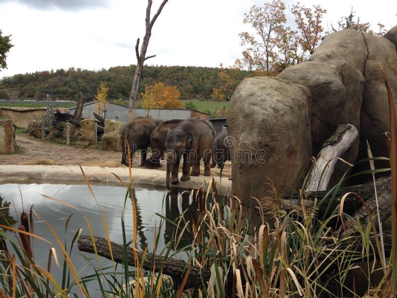 Prag-Zoo stockbilder