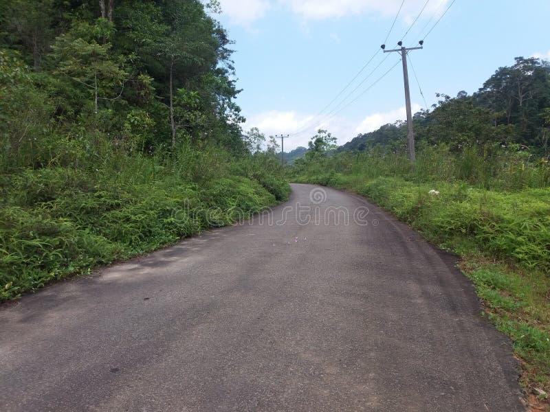 Praga da floresta do perigo jungal em um Sri Lanka imagem de stock