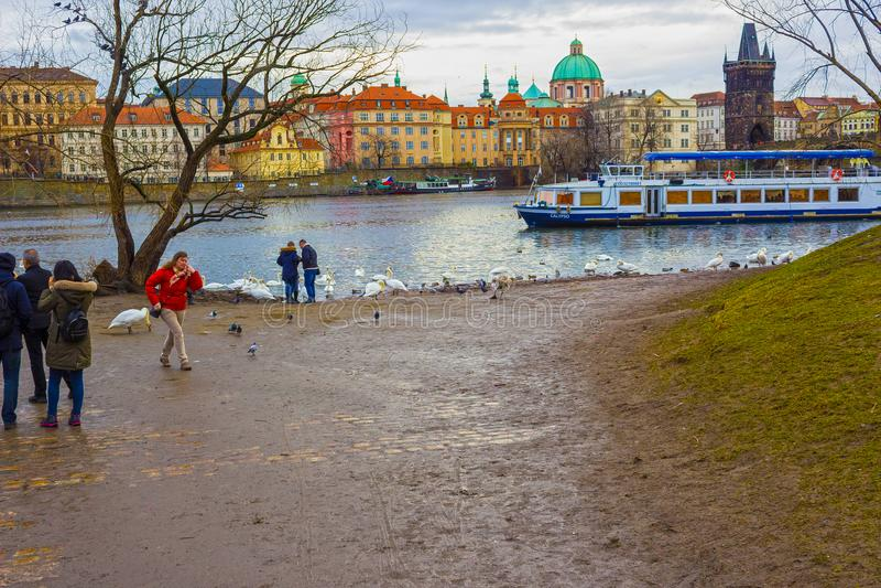 Praga, República Checa - 31 de dezembro de 2017: Vista na ponte e nas cisnes de Charles no rio de Vltava em Praga fotos de stock royalty free