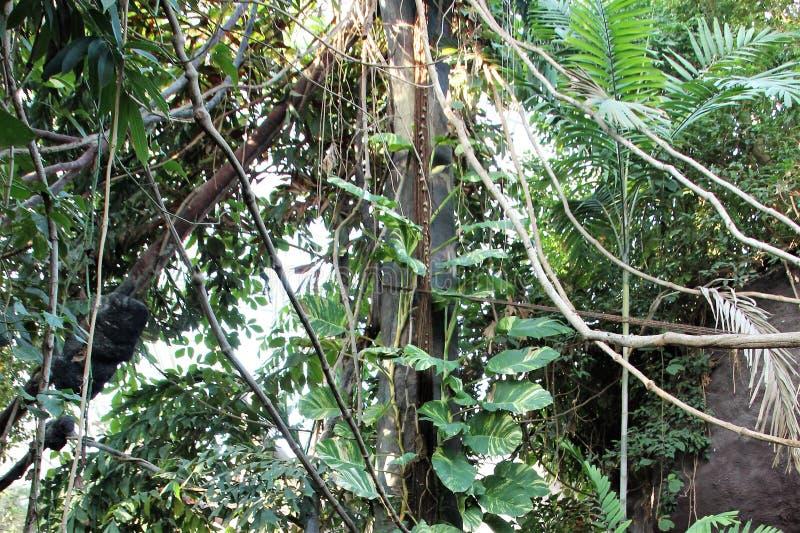 Praga, República Checa, em janeiro de 2015 Fragmento de uma zona da floresta subtropical úmida no jardim zoológico fotos de stock royalty free