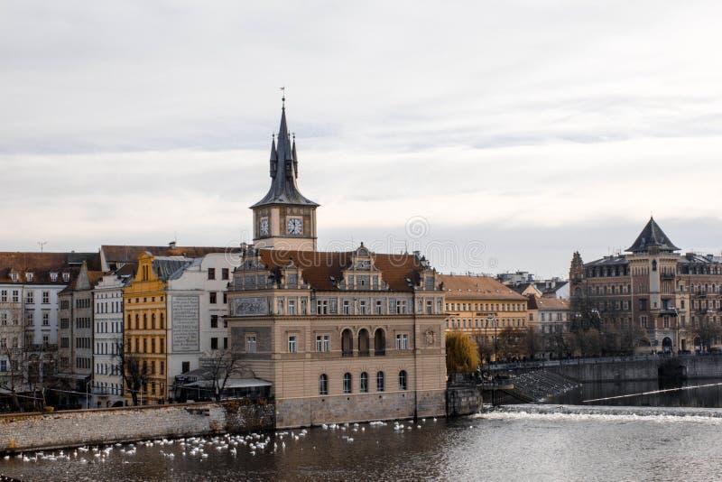 praga Rep?blica Checa 2016, noviembre Hermosa vista del río viejo de Praga y de Moldava en un día nublado Cisnes por el río en Pr fotografía de archivo libre de regalías
