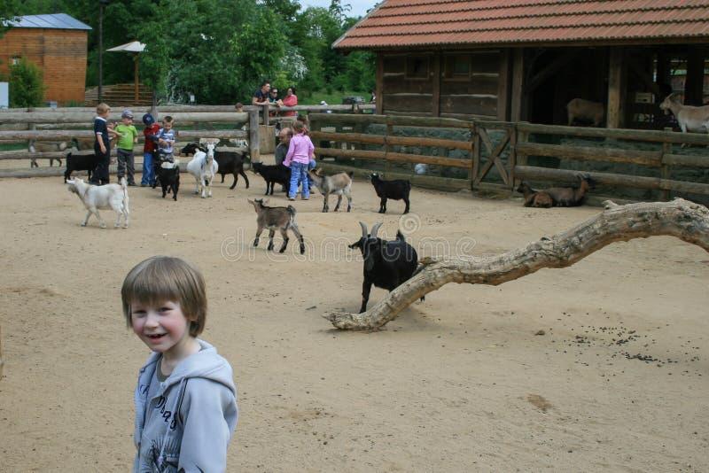 2009 05 07, Praga, repubblica Ceca Bambini nello zoo del bambino Bambini sull'azienda agricola immagini stock