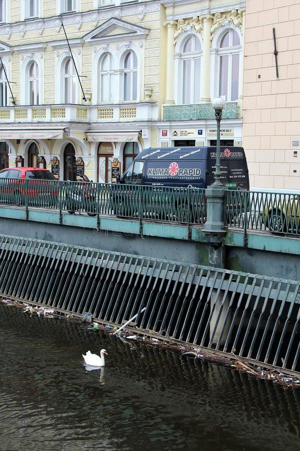 Praga, repubblica Ceca, gennaio 2015 Argine del fiume la Moldava ed il cigno bianco sull'acqua fotografia stock