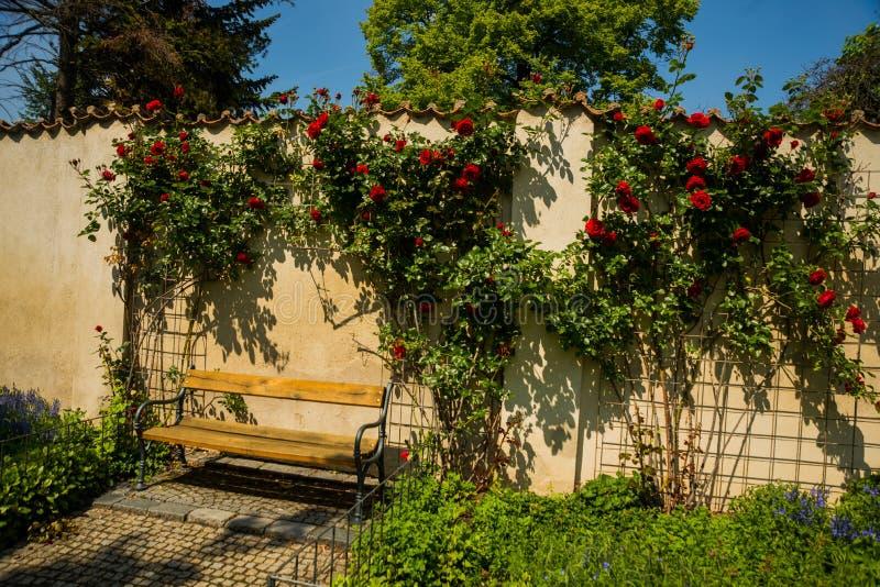 Praga, republika czech: Piękny park z różami i ławką Wyszehradzki forteca Vysehrad zdjęcie royalty free