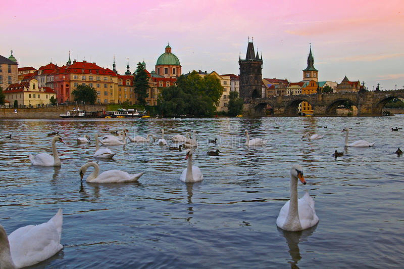 Prague Architecture and St. Charles Bridge in Czech Republic. Saint Charles Bridge and architecture buildings, towers and swans on the Vltava river in Prague stock photography