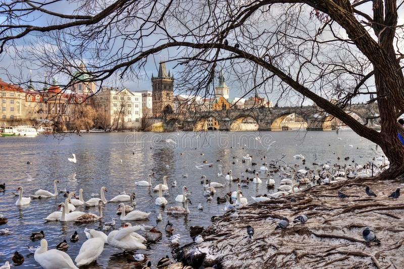 Download Prague - Bridge editorial photography. Image of czech - 83714172