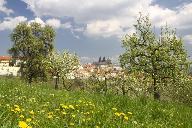 Prague Castle. View on Prague Castle in spring stock photos
