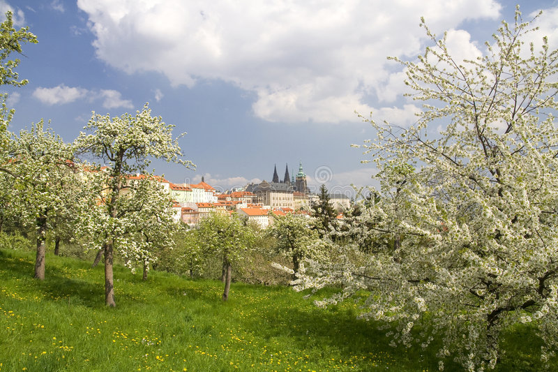 Prague Castle. View on Prague Castle in spring stock images