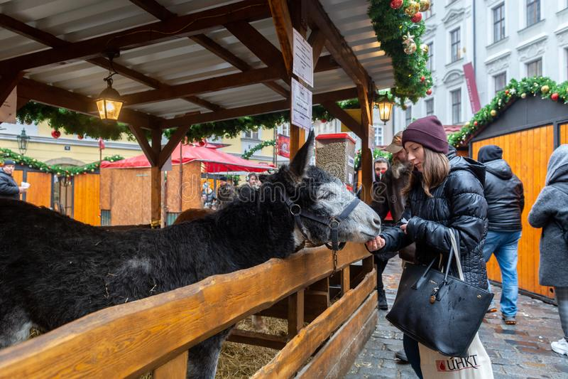 Prague, Czech Republic - December 2018: Adorable donkey on holiday market stock image