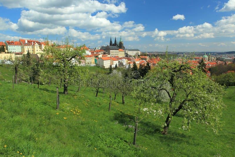 Prague i fjäder royaltyfri foto