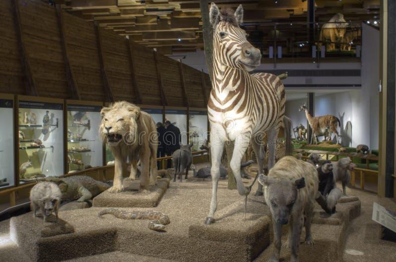 Prague Museum - Noah's Ark stock images