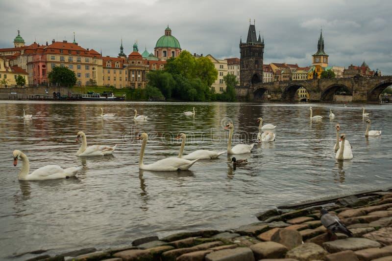 Prague Tjeckien: Karluv mest den berömda härliga och forntida Charles bron, ett populärt ställe för turister arkivfoto