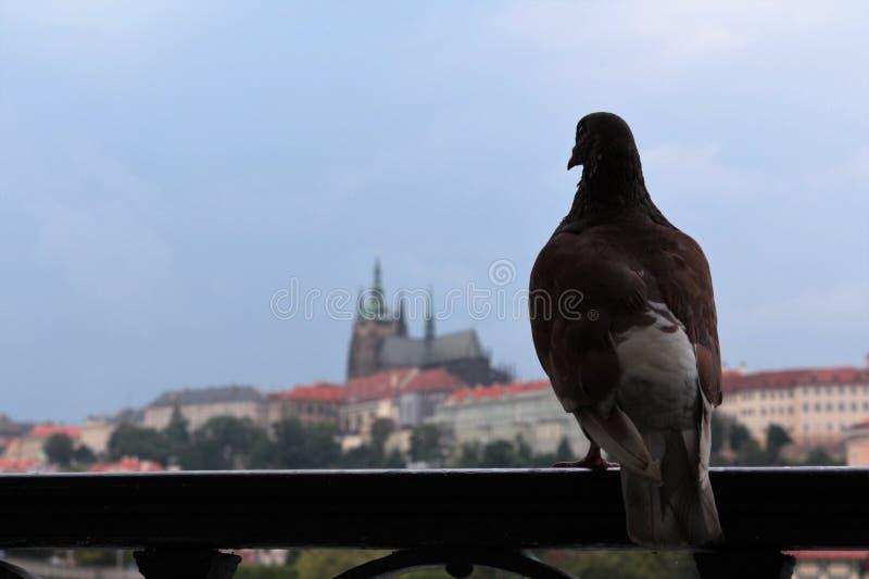 Prague visitor royalty free stock photo