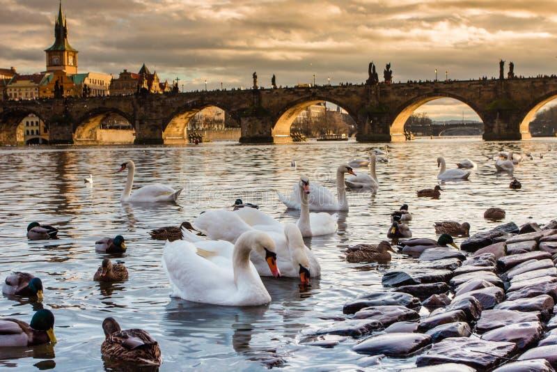 Praha Karluv najwięcej, Charles mosta zmierzch Praga czech, słońce set, Vltava rzeka zdjęcia royalty free