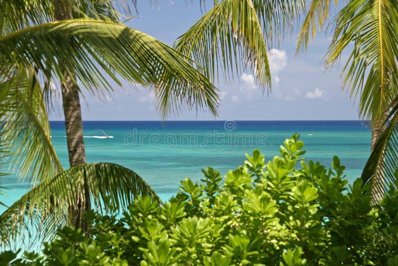 Download Praia foto de stock. Imagem de férias, curso, verde, céu - 12811774