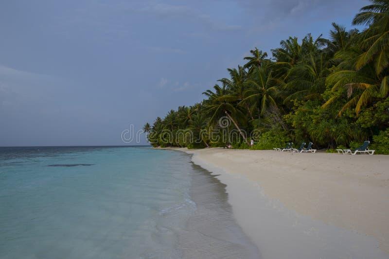 Praia agradável em Maldivas com fileira de árvores de coco no tempo do por do sol imagem de stock