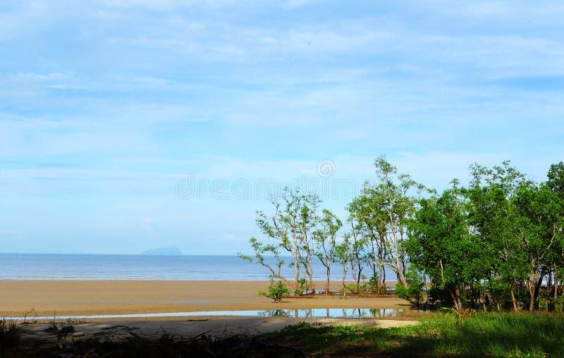 Praia arenosa dos manguezais de Sarawak imagens de stock