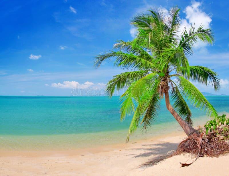 Praia bonita com palma e mar de coco fotografia de stock royalty free