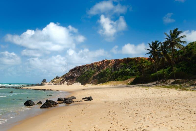 Praia bonita com palmeiras imagem de stock royalty free