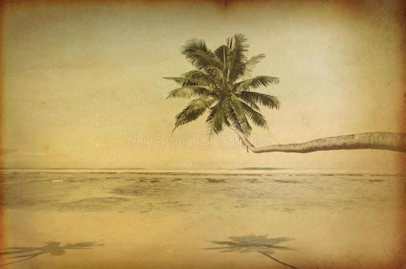 Praia bonita tropical retro com palmeira ilustração royalty free