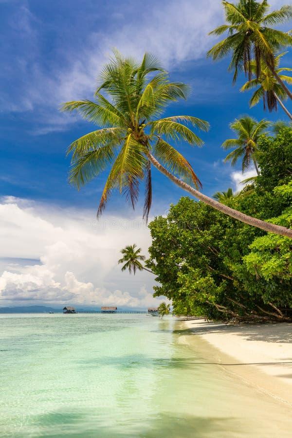 Praia bonita Vista da praia tropical do paraíso com palmas de coco imagens de stock