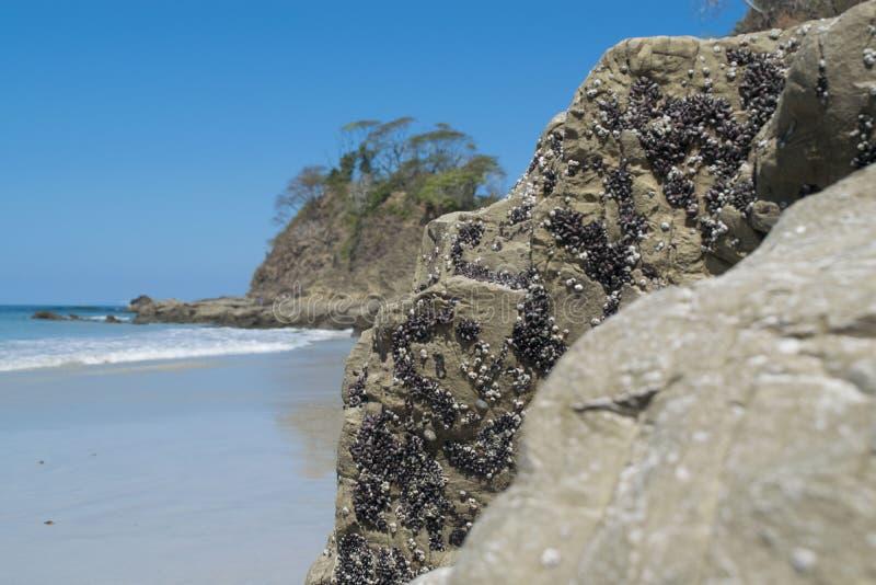 Praia branca de Costa Rica foto de stock royalty free