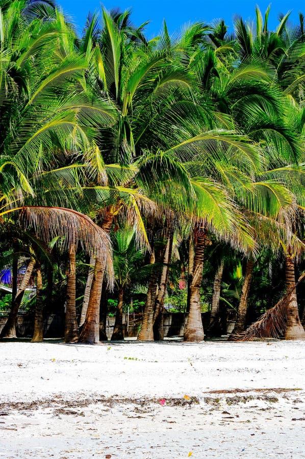 Praia branca tropical rural da areia com palmas de coco foto de stock royalty free