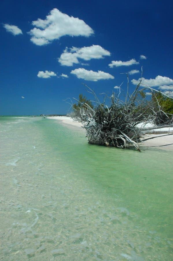 Praia cénico (florida) imagem de stock