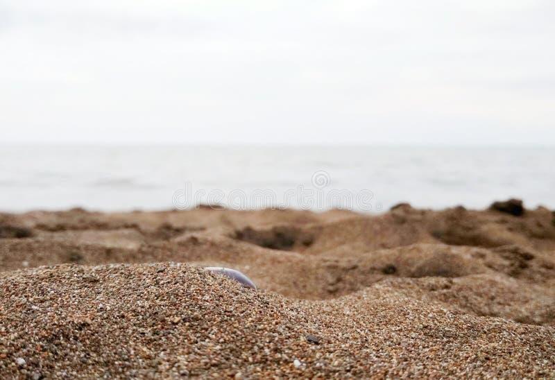 praia central de java imagem de stock