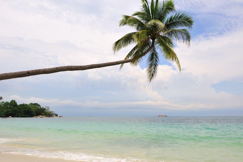 Praia com árvore de coco fotografia de stock royalty free