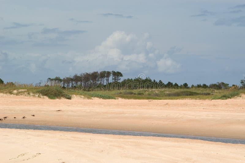Praia com árvores e o córrego maré fotografia de stock royalty free
