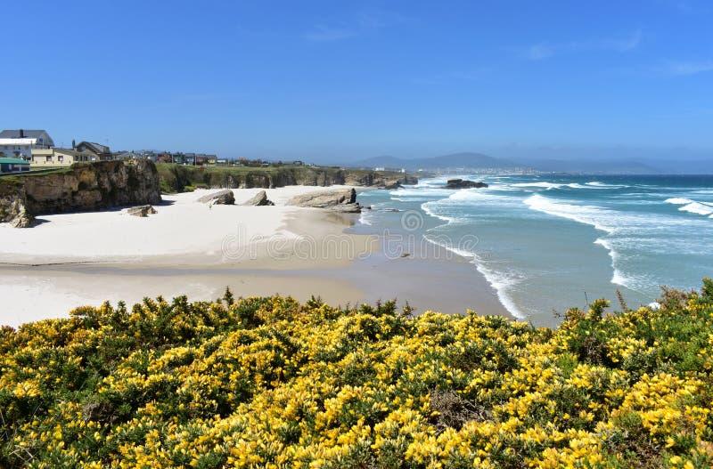 Praia com areia, as rochas e as ondas brancas Vista de um penhasco com flores amarelas Lugo, Espanha foto de stock royalty free