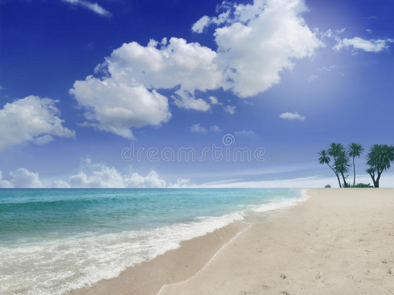 Praia com palmas fotografia de stock royalty free