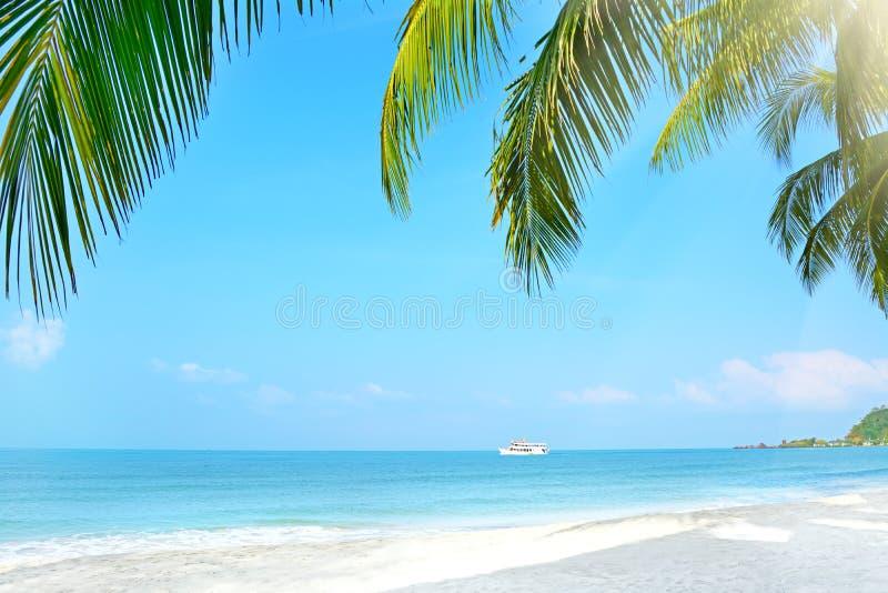 Praia com palmeiras. Koh Chang, Tailândia fotos de stock