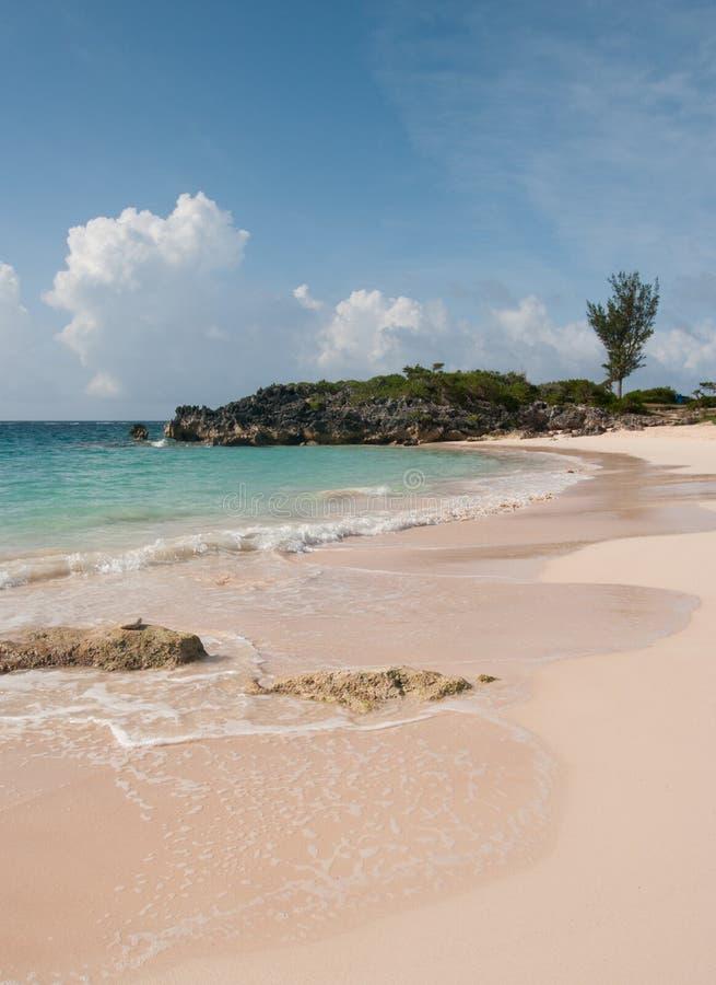 Praia cor-de-rosa bonita da areia em Bermuda foto de stock royalty free