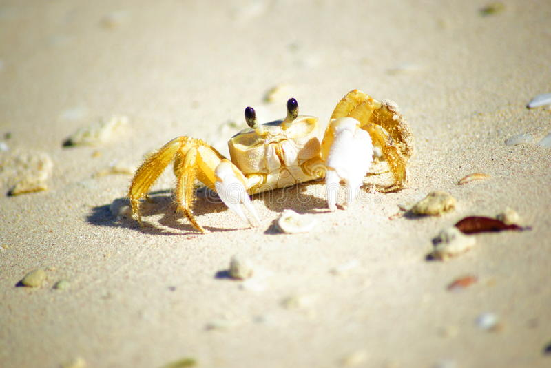 Praia Cuba de Guardalavaca do caranguejo fotos de stock royalty free