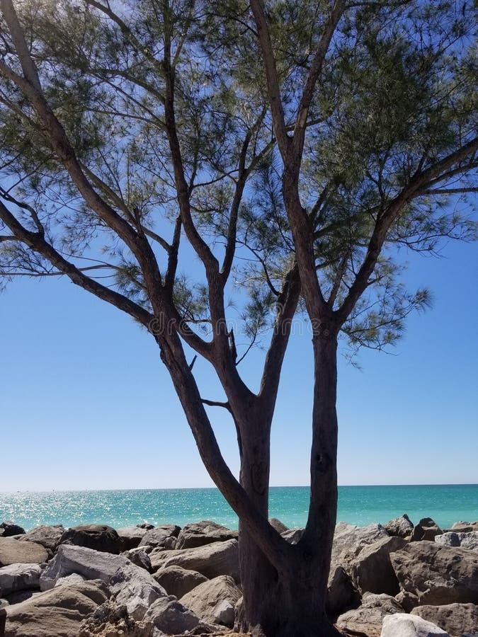 Praia da árvore imagens de stock royalty free