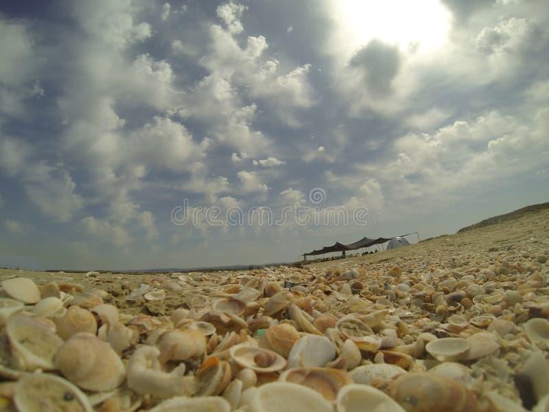 Praia da concha do mar em Israel imagens de stock