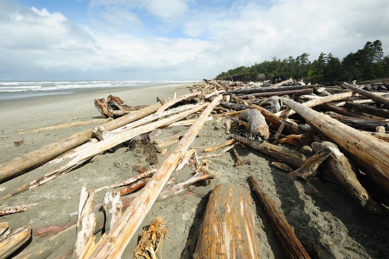 Praia da Costa do Pacífico foto de stock