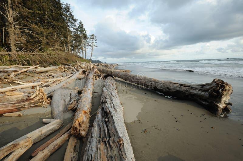 Praia da Costa do Pacífico foto de stock royalty free