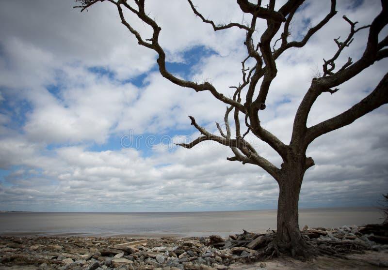 Praia da madeira da tração fotos de stock