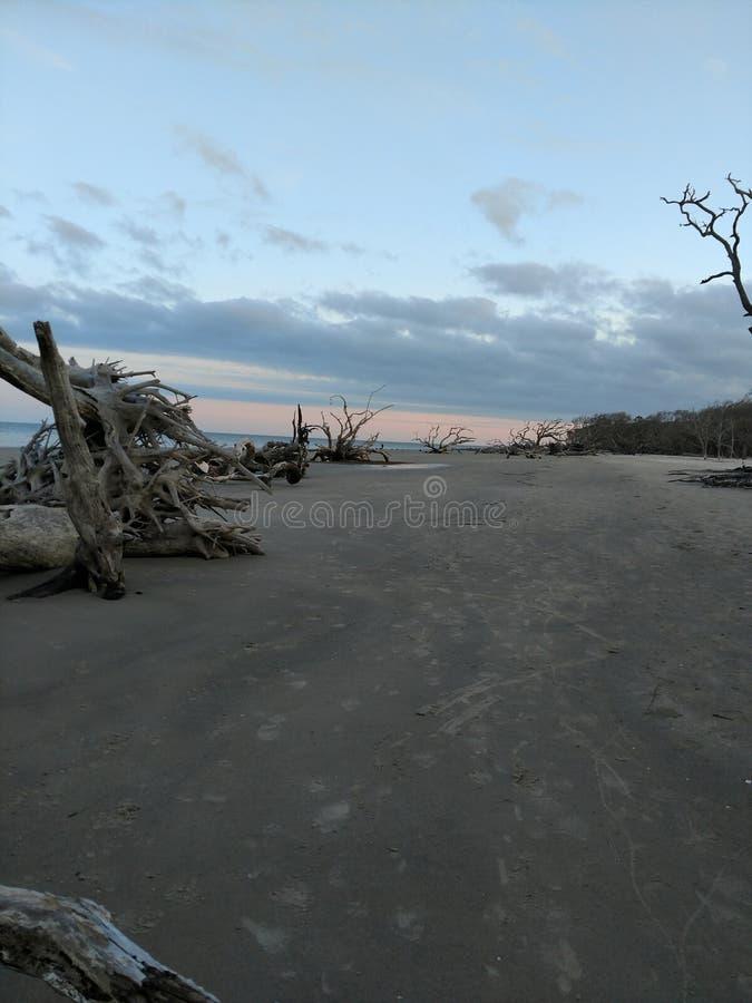 Praia da madeira lançada à costa foto de stock royalty free