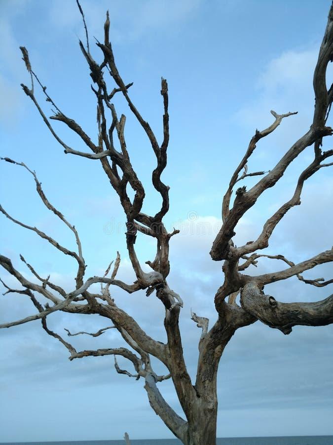Praia da madeira lançada à costa fotografia de stock