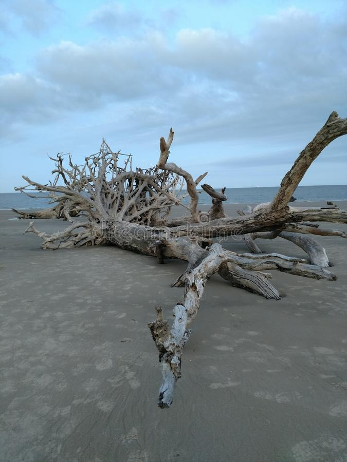 Praia da madeira lançada à costa foto de stock