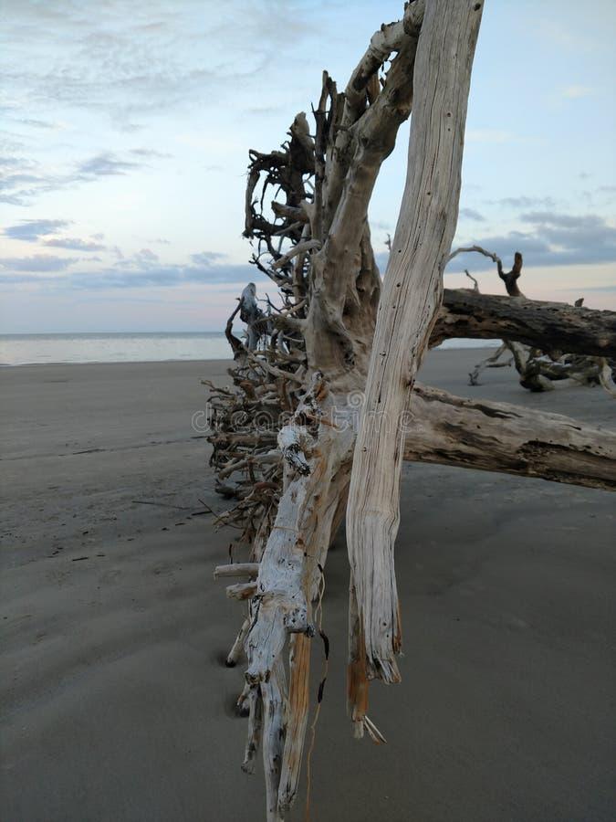 Praia da madeira lançada à costa imagens de stock royalty free