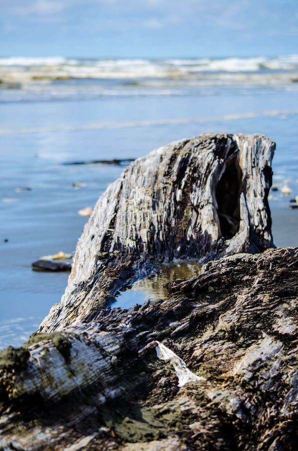 Praia da madeira lançada à costa fotos de stock royalty free